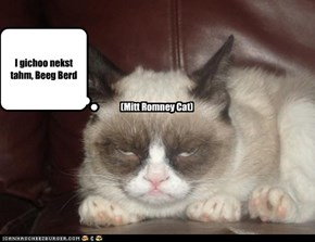 (Mitt Romney Cat)