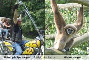 Motorcycle Ape Hanger Totally Looks Like Gibbon Hanger
