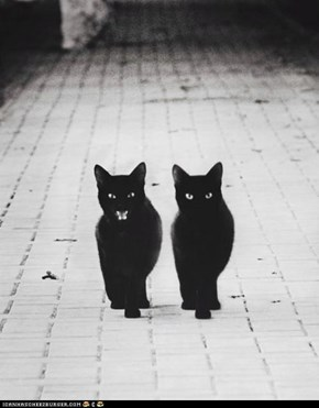 These are some badddd kitties.