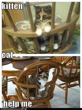 kitten cat  help me
