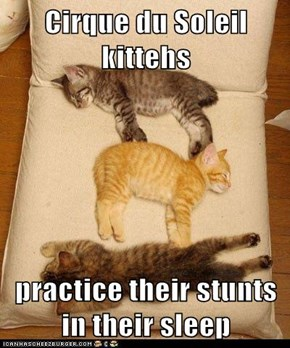 Cirque du Soleil kittehs  practice their stunts in their sleep