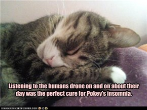 Listening to the humans drone on and on about their day was the perfect cure for Pokey's insomnia.