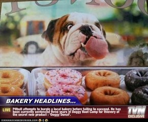 BAKERY HEADLINES... - Pitbull attempts to burgle a local bakery before failing to succeed. He has been currently sentenced three years in Doggy Boot Camp for thievery of the secret new product : 'Doggy Donut'.