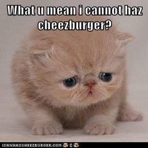 What u mean i cannot haz cheezburger?