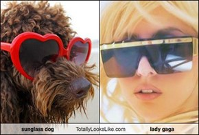 sunglass dog Totally Looks Like lady gaga