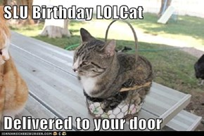 SLU Birthday LOLCat  Delivered to your door