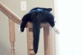 Cyoot Kitteh of teh Day: Bannister Butt