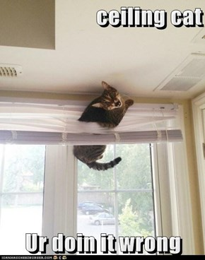 ceiling cat      Ur doin it wrong