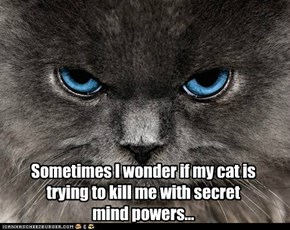 Sometimes I wonder if my cat is trying to kill me with secret mind powers...