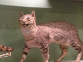 Taxidermy FAIL