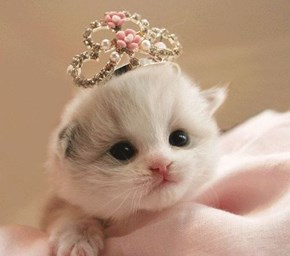 Cyoot Kitteh of teh Day: Lil' Princess