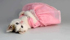 Cyoot Kitteh of teh Day: All Dressed Up With Nowhere to Go...