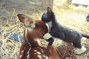 Cyoot Kitteh of teh Day: Ai Lubbs U, Bambi!