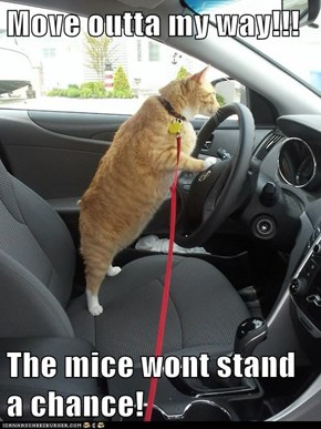 Move outta my way!!!  The mice wont stand a chance!