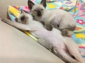 Cyoot Kittehs of teh Day: Only I Can Rub This Tummy!  Go Find Your Own!