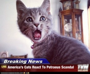 Breaking News - America's Cats React To Petraeus Scandal