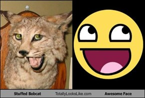 Stuffed Bobcat Totally Looks Like Awesome Face