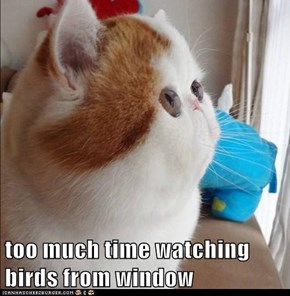 too much time watching birds from window