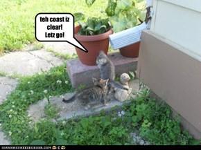 runaway kittens