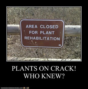 PLANTS ON CRACK! WHO KNEW?