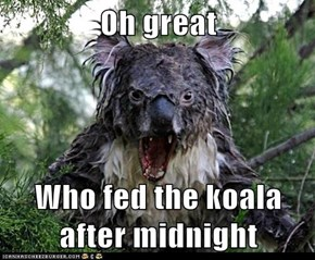 Oh great  Who fed the koala after midnight