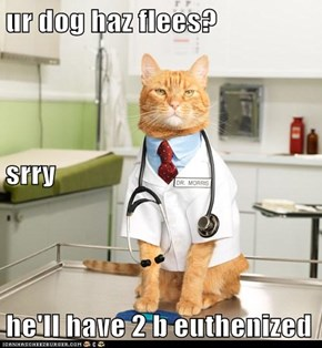 ur dog haz flees? srry he'll have 2 b euthenized