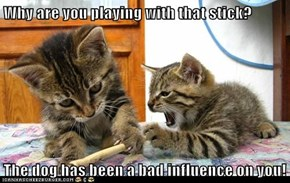 Why are you playing with that stick?  The dog has been a bad influence on you!