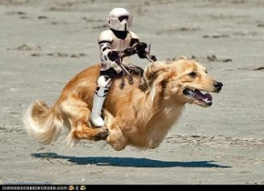 disneys 'homeward bound'- meets 'star wars'