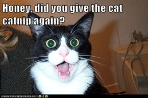 Honey, did you give the cat catnip again?