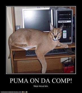 PUMA ON DA COMP!