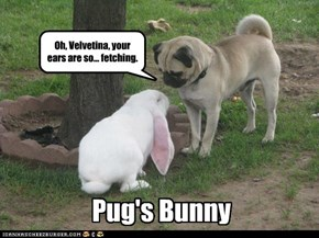 Pun's Buggy