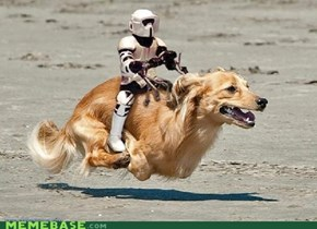 if disneys'homeward bound' fused with 'star wars'