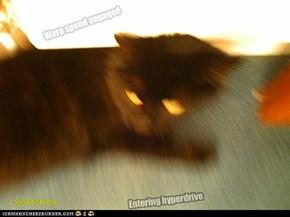 Startrek cat