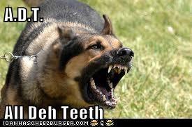 A.D.T.  All Deh Teeth