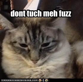 dont tuch meh fuzz