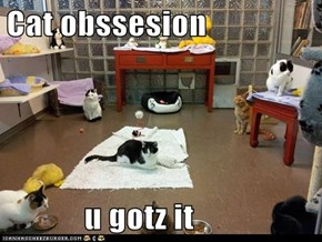 Cat obssesion              u gotz it