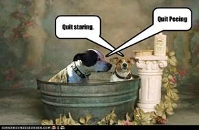 Quit staring.