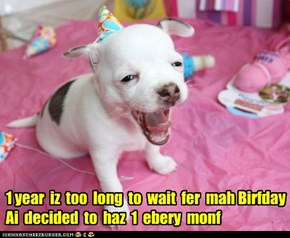 1 year  iz  too  long  to  wait  fer  mah Birfday  Ai  decided  to  haz  1  ebery  monf