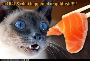 So THAT'S what happened ur goldfish!!!!!