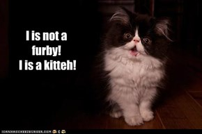 I is not a furby!  I is a kitteh!