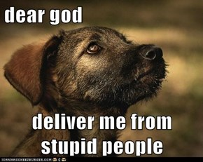 dear god  deliver me from stupid people