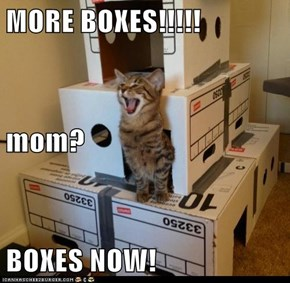 MORE BOXES!!!!! mom? BOXES NOW!