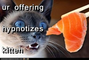 ur offering hypnotizes kitteh