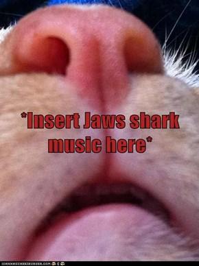 *Insert Jaws shark music here*