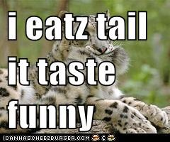 i eatz tail  it taste funny