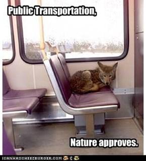 Public Transportation,