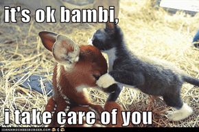 it's ok bambi,  i take care of you