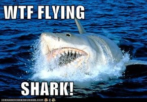 WTF FLYING       SHARK!