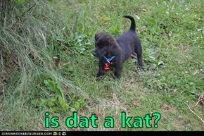 is dat a kat?