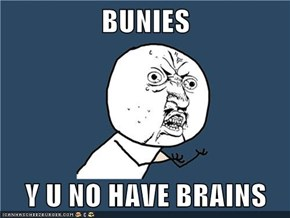BUNIES  Y U NO HAVE BRAINS